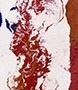 Esther-Ramos-1992_11_10-Coleta-de-caballo-137x16x5-cms